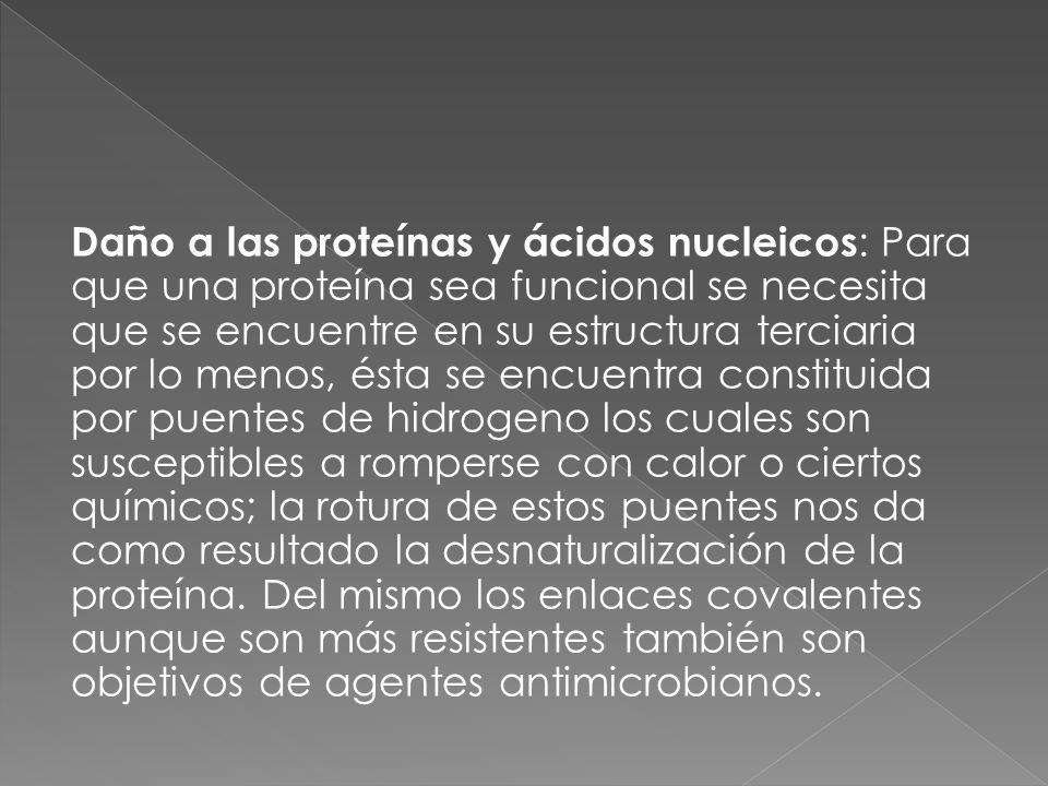 Daño a las proteínas y ácidos nucleicos : Para que una proteína sea funcional se necesita que se encuentre en su estructura terciaria por lo menos, és