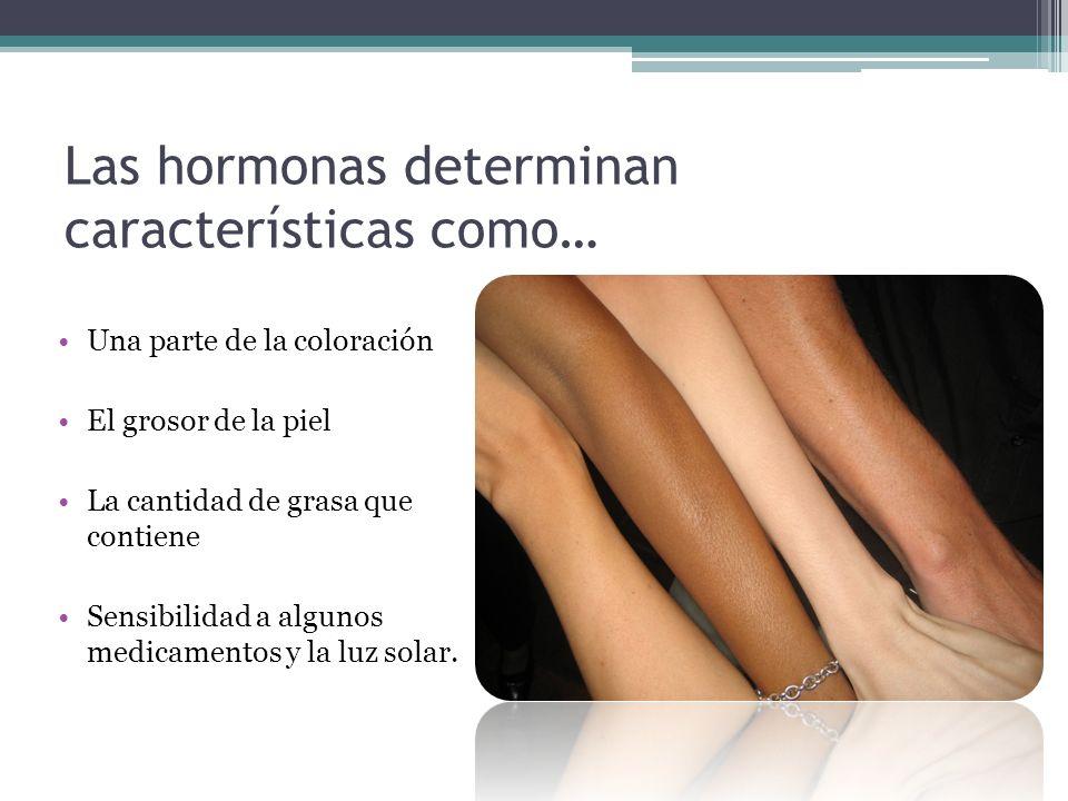Las hormonas determinan características como… Una parte de la coloración El grosor de la piel La cantidad de grasa que contiene Sensibilidad a algunos