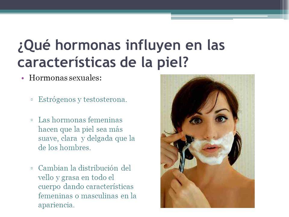 ¿Qué hormonas influyen en las características de la piel? Hormonas sexuales: Estrógenos y testosterona. Las hormonas femeninas hacen que la piel sea m