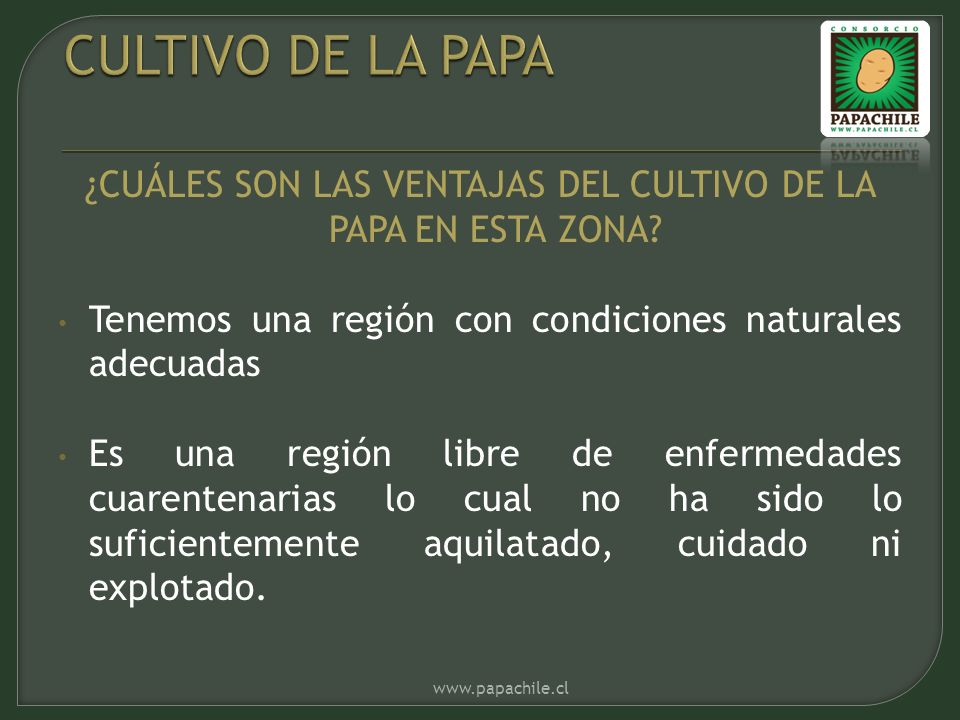 ¿CUÁLES SON LAS VENTAJAS DEL CULTIVO DE LA PAPA EN ESTA ZONA.