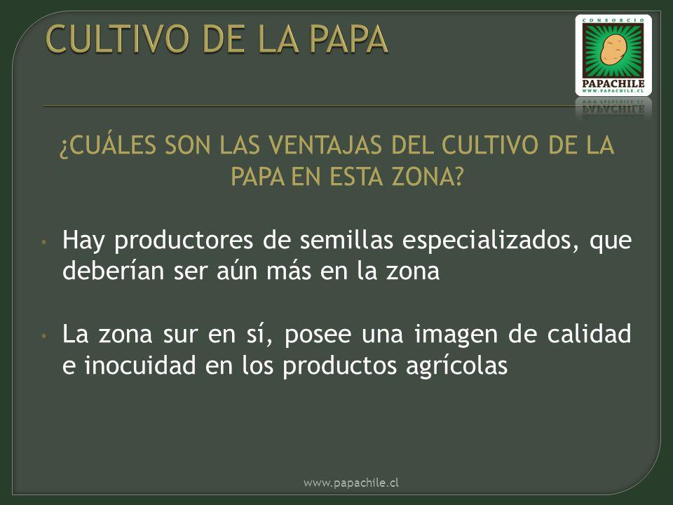 ¿CUÁLES SON LAS VENTAJAS DEL CULTIVO DE LA PAPA EN ESTA ZONA? Hay productores de semillas especializados, que deberían ser aún más en la zona La zona