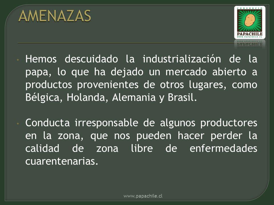 Hemos descuidado la industrialización de la papa, lo que ha dejado un mercado abierto a productos provenientes de otros lugares, como Bélgica, Holanda, Alemania y Brasil.