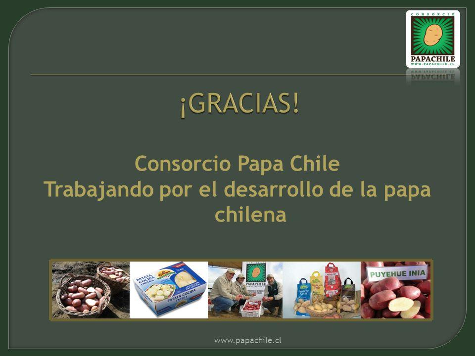 Consorcio Papa Chile Trabajando por el desarrollo de la papa chilena www.papachile.cl