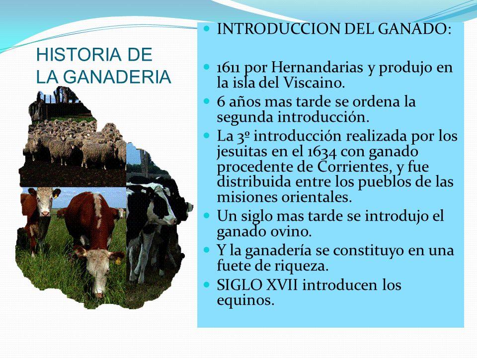 HISTORIA DE LA GANADERIA INTRODUCCION DEL GANADO: 1611 por Hernandarias y produjo en la isla del Viscaino. 6 años mas tarde se ordena la segunda intro