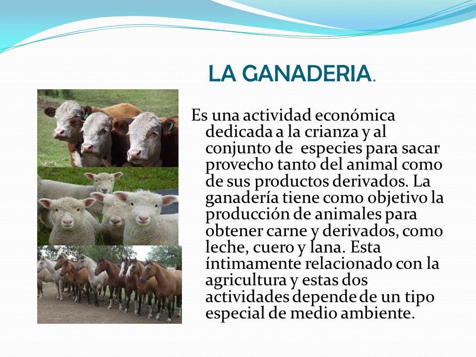 LA GANADERIA. Es una actividad económica dedicada a la crianza y al conjunto de especies para sacar provecho tanto del animal como de sus productos de