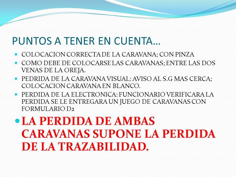 PUNTOS A TENER EN CUENTA… COLOCACION CORRECTA DE LA CARAVANA; CON PINZA COMO DEBE DE COLOCARSE LAS CARAVANAS; ENTRE LAS DOS VENAS DE LA OREJA. PEDRIDA
