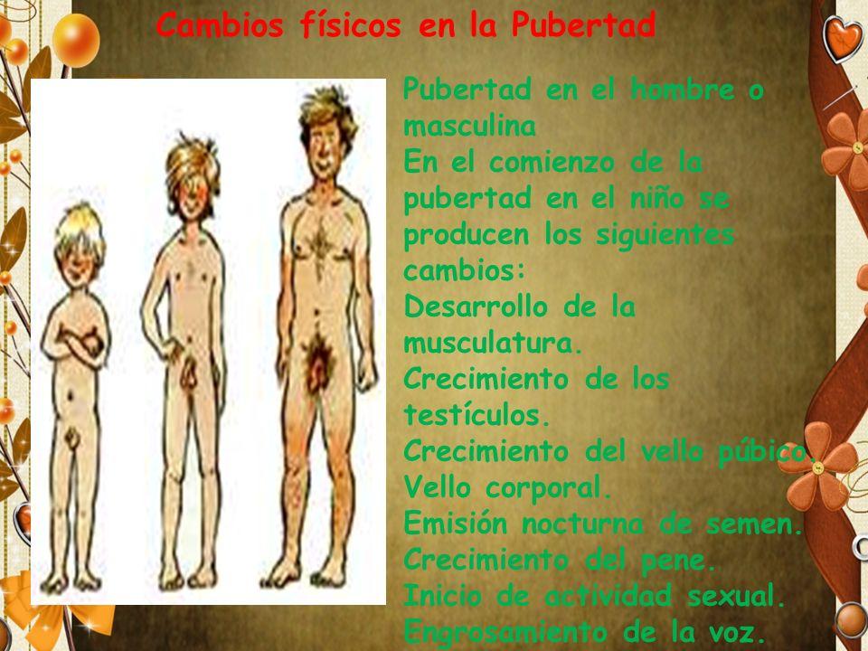 Pubertad en el hombre o masculina En el comienzo de la pubertad en el niño se producen los siguientes cambios: Desarrollo de la musculatura. Crecimien