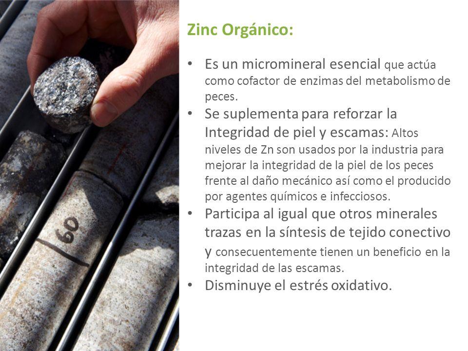 Zinc Orgánico: Es un micromineral esencial que actúa como cofactor de enzimas del metabolismo de peces.