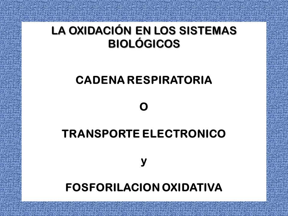 LA OXIDACIÓN EN LOS SISTEMAS BIOLÓGICOS CADENA RESPIRATORIA O TRANSPORTE ELECTRONICO y FOSFORILACION OXIDATIVA