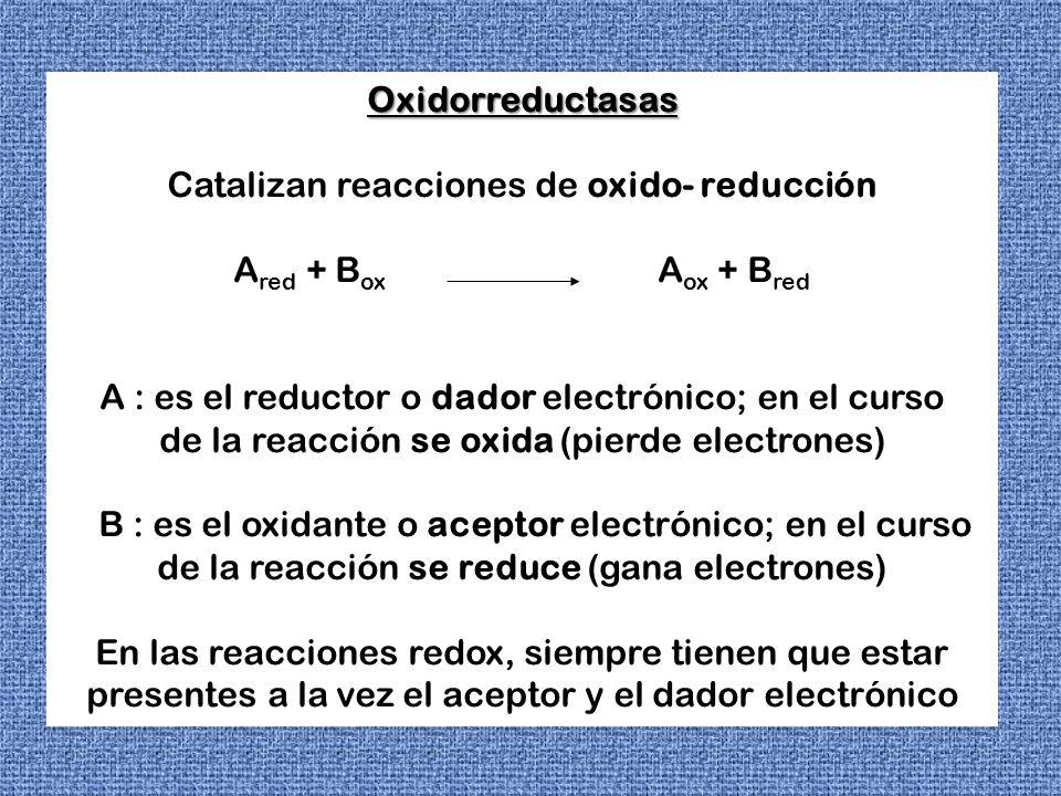 Oxidorreductasas Catalizan reacciones de oxido- reducción A red + B ox A ox + B red A : es el reductor o dador electrónico; en el curso de la reacción