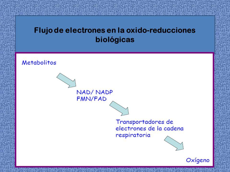 Flujo de electrones en la oxido-reducciones biológicas