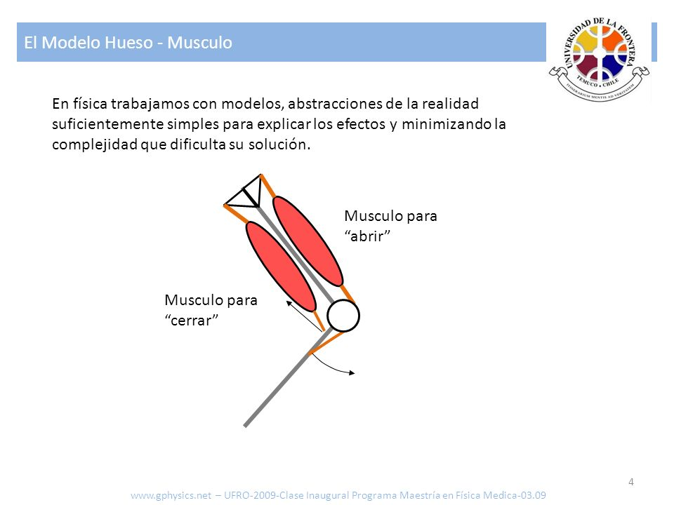 El Modelo Hueso - Musculo 4 www.gphysics.net – UFRO-2009-Clase Inaugural Programa Maestría en Física Medica-03.09 Musculo para abrir Musculo para cerr