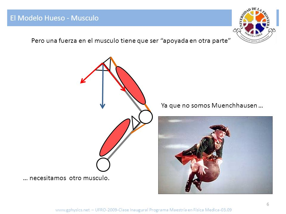 El Modelo Hueso - Musculo 6 www.gphysics.net – UFRO-2009-Clase Inaugural Programa Maestría en Física Medica-03.09 Pero una fuerza en el musculo tiene
