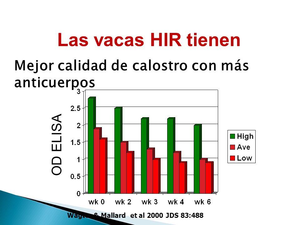 GreaLterLas Alas vacody in Colostrum & Milk Wagter & Mallard et al 2000 JDS 83:488 OD ELISA Las vacas HIR tienen Mejor calidad de calostro con más anticuerpos