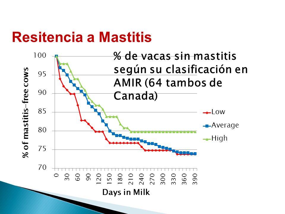 % de vacas sin mastitis según su clasificación en AMIR (64 tambos de Canada) Resitencia a Mastitis