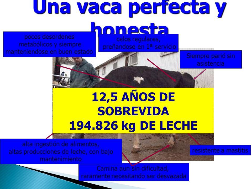 Una vaca perfecta y honesta Camina aun sin dificultad, raramente necesitando ser desvazada alta ingestión de alimentos, altas producciones de leche, con bajo mantenimiento celos regulares, preñandose en 1ª servicio Siempre parió sin asistencia resistente a mastitis pocos desordenes metabólicos y siempre manteniendose en buen estado 12,5 AÑOS DE SOBREVIDA 194.826 kg DE LECHE