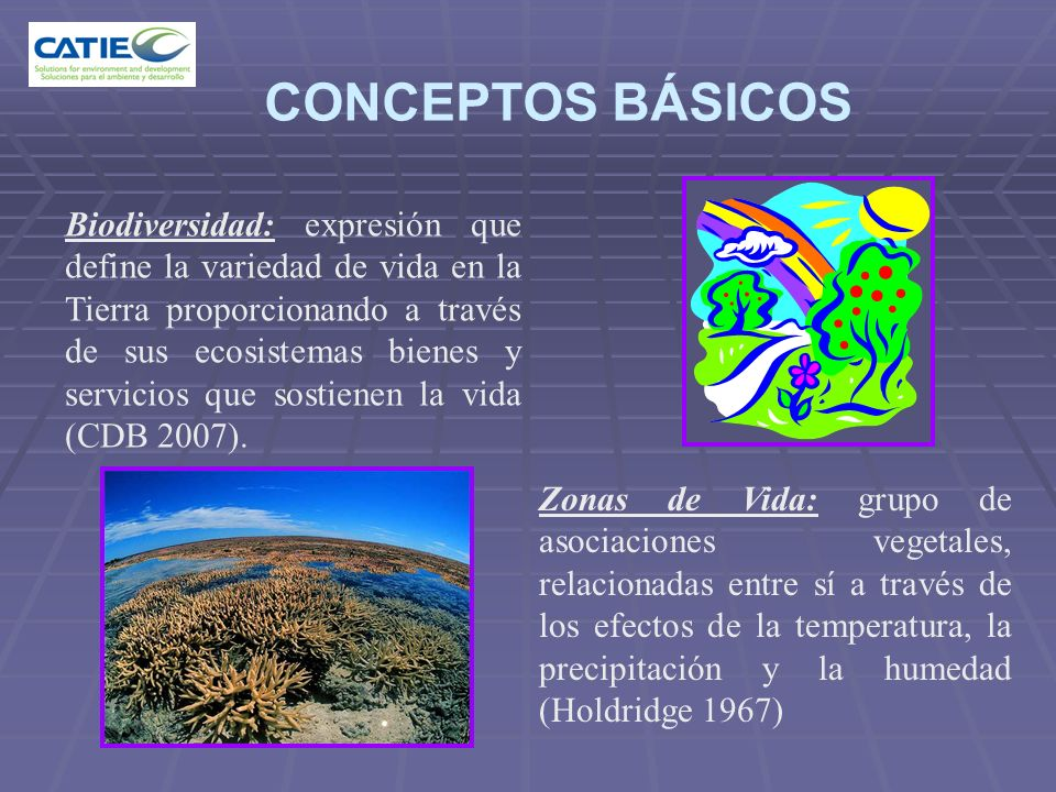 CONCEPTOS BÁSICOS Biodiversidad: expresión que define la variedad de vida en la Tierra proporcionando a través de sus ecosistemas bienes y servicios q