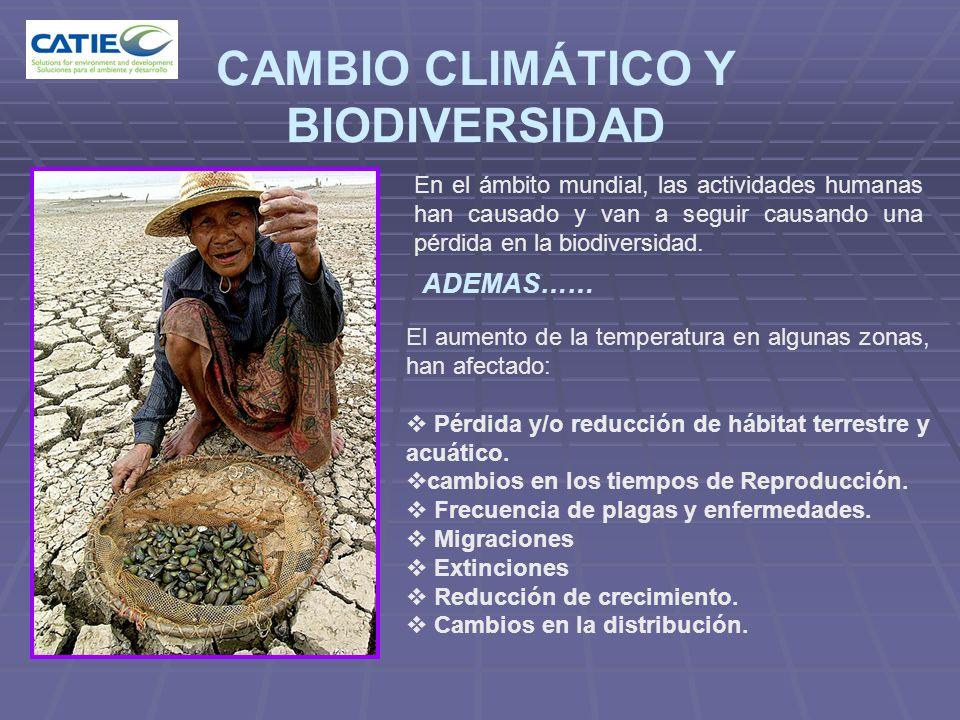 CAMBIO CLIMÁTICO Y BIODIVERSIDAD En el ámbito mundial, las actividades humanas han causado y van a seguir causando una pérdida en la biodiversidad. AD