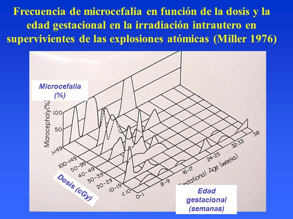 Frecuencia de microcefalia en función de la dosis y la edad gestacional en la irradiación intrautero en supervivientes de las explosiones atómicas (Mi