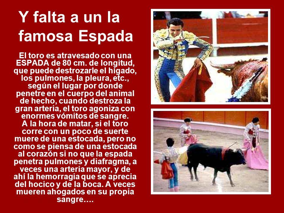 Según el esta Demostrando un Gran Valor… La pérdida de sangre y las heridas en la espina dorsal impiden que el toro levante la cabeza de manera normal