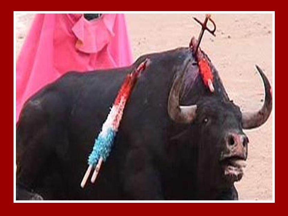 Y falta a un la famosa Espada El toro es atravesado con una ESPADA de 80 cm. de longitud, que puede destrozarle el hígado, los pulmones, la pleura, et