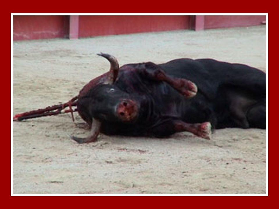 LA CORRIDA DE TOROS PARA MI.. !! ES MATAR POR DIVERSION… Tal vez hayas oído que la fiesta de los toros es un arte, pero no lo es.... Es una Ciencia...
