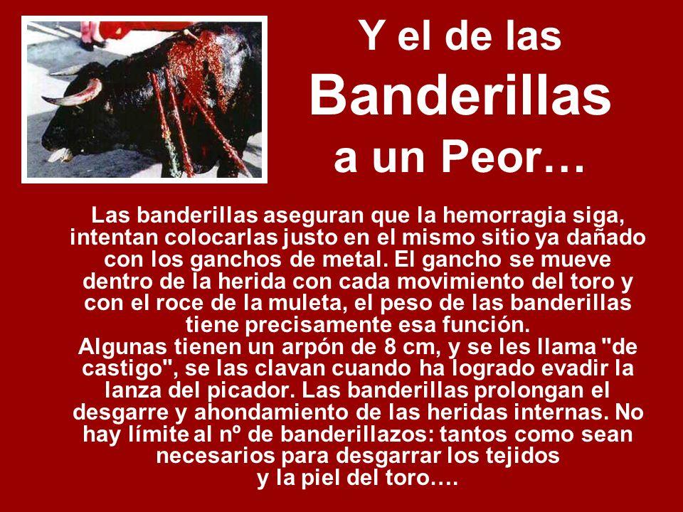 Y el de las Banderillas a un Peor… Las banderillas aseguran que la hemorragia siga, intentan colocarlas justo en el mismo sitio ya dañado con los ganchos de metal.