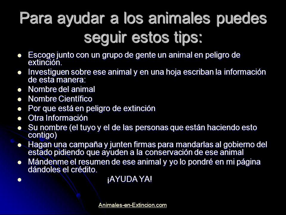 Para ayudar a los animales puedes seguir estos tips: Escoge junto con un grupo de gente un animal en peligro de extinción. Escoge junto con un grupo d