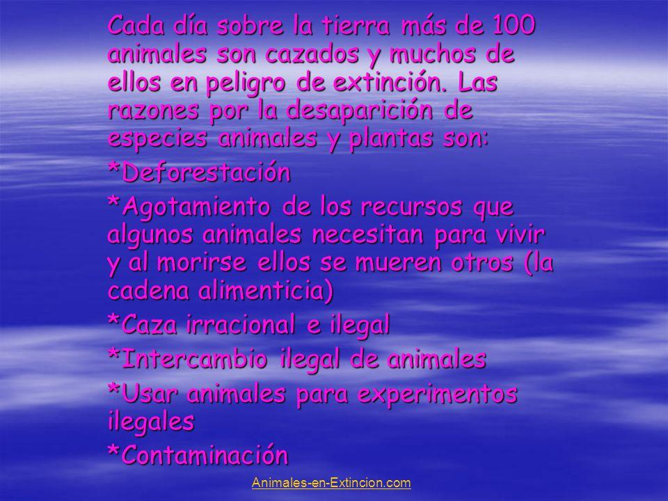 Razón #1 Deforestación El hombre a destruido los hábitats de los animales irracionalmente y gracias a eso muchos animales han desaparecido o muerto.