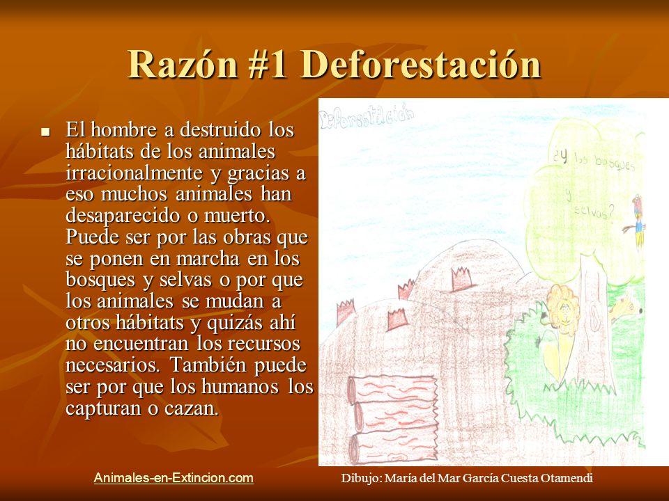 Razón #2 Agotamiento de recursos Gracias a la deforestación los recursos que necesitan los animales para vivir se agotan, entonces ellos buscan otro hábitat pero es difícil encontrar otro hábitat igual entonces es difícil para ellos adaptarse.