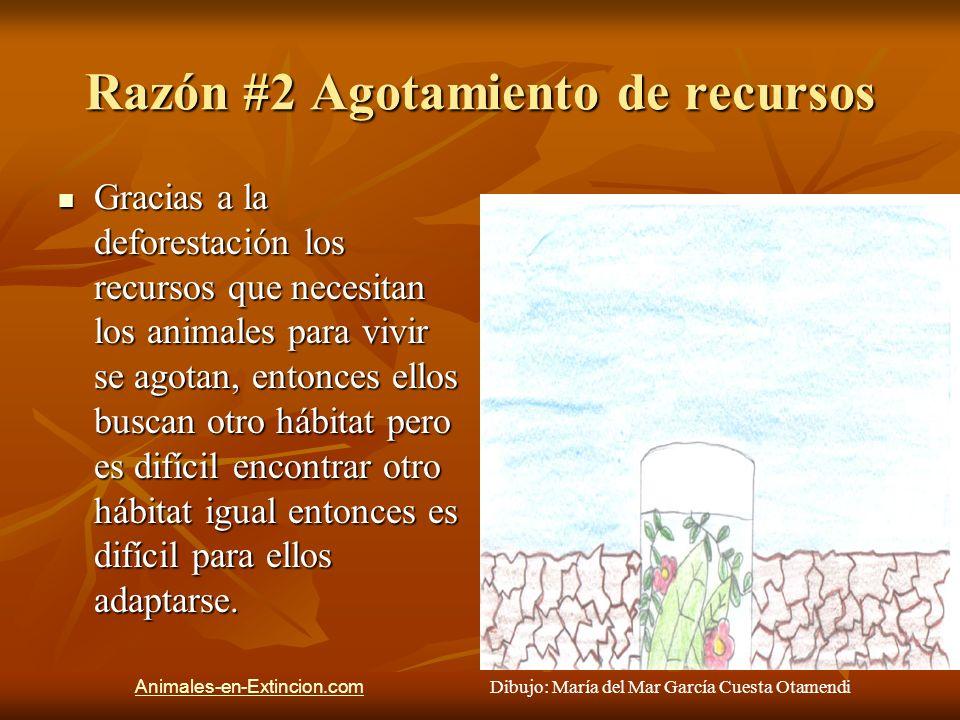 Razón #2 Agotamiento de recursos Gracias a la deforestación los recursos que necesitan los animales para vivir se agotan, entonces ellos buscan otro h