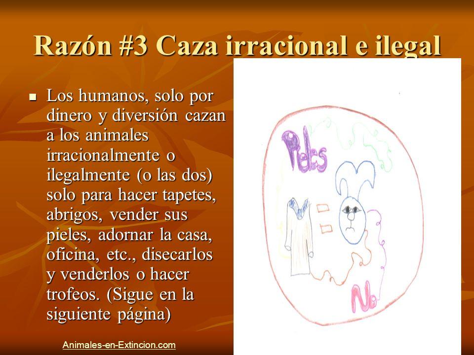 Razón #3 Caza irracional e ilegal Los humanos, solo por dinero y diversión cazan a los animales irracionalmente o ilegalmente (o las dos) solo para ha