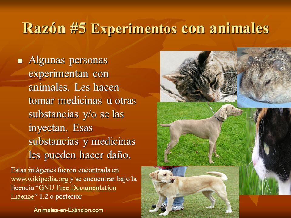 Razón #5 Experimentos con animales Algunas personas experimentan con animales. Les hacen tomar medicinas u otras substancias y/o se las inyectan. Esas