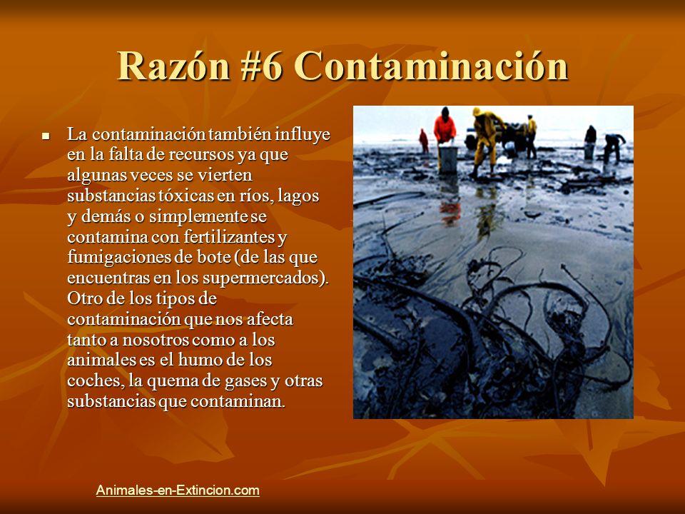 Razón #6 Contaminación La contaminación también influye en la falta de recursos ya que algunas veces se vierten substancias tóxicas en ríos, lagos y d