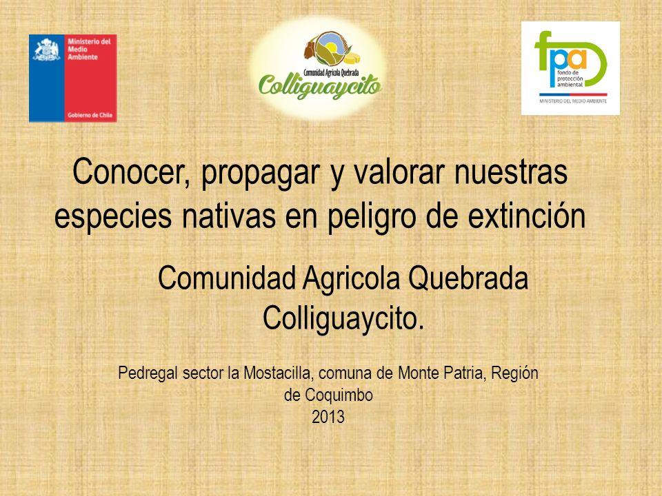 Conocer, propagar y valorar nuestras especies nativas en peligro de extinción Comunidad Agricola Quebrada Colliguaycito.