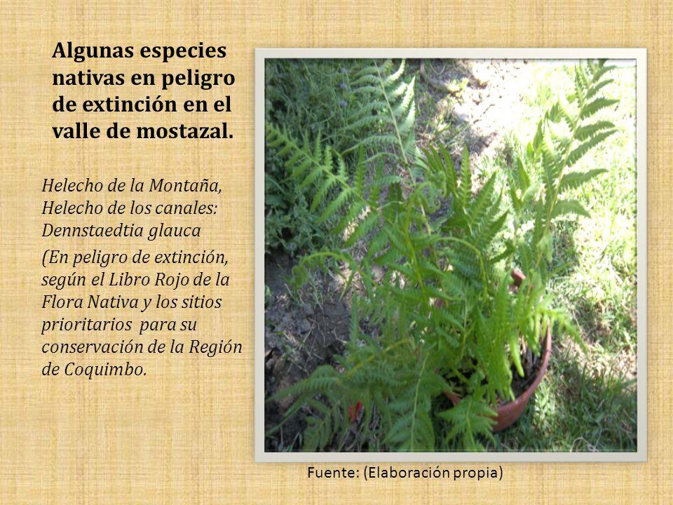 Algunas especies nativas en peligro de extinción en el valle de mostazal.