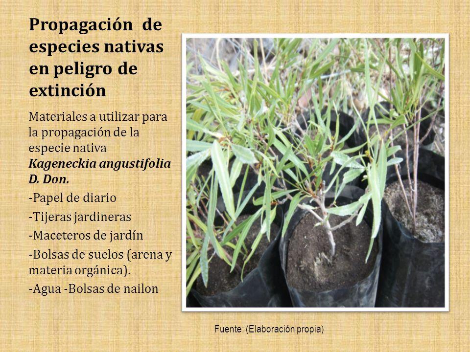Propagación de especies nativas en peligro de extinción Materiales a utilizar para la propagación de la especie nativa Kageneckia angustifolia D.