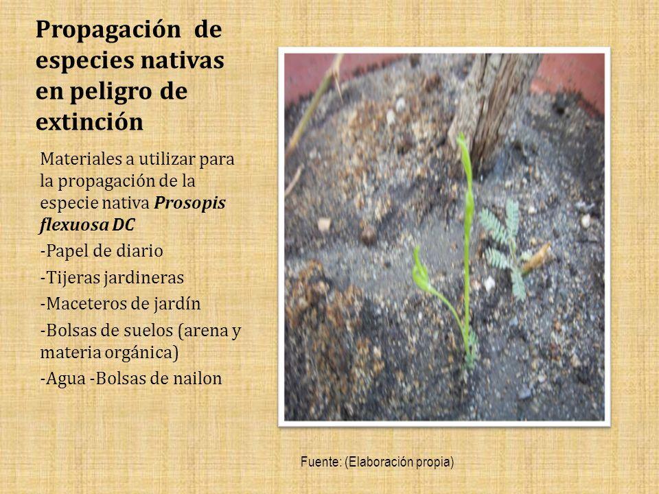 Propagación de especies nativas en peligro de extinción Materiales a utilizar para la propagación de la especie nativa Prosopis flexuosa DC -Papel de diario -Tijeras jardineras -Maceteros de jardín -Bolsas de suelos (arena y materia orgánica) -Agua -Bolsas de nailon Fuente: (Elaboración propia)