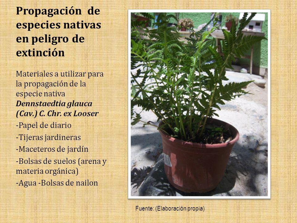 Propagación de especies nativas en peligro de extinción Materiales a utilizar para la propagación de la especie nativa Dennstaedtia glauca (Cav.) C.