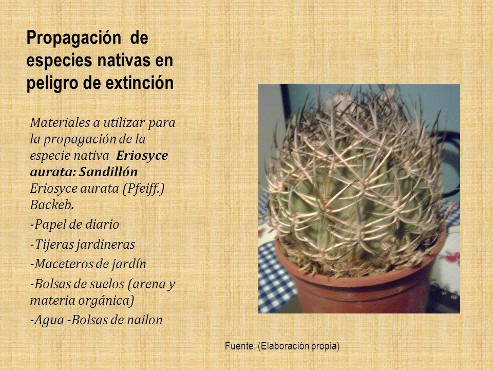 Propagación de especies nativas en peligro de extinción Materiales a utilizar para la propagación de la especie nativa Eriosyce aurata: Sandillón Eriosyce aurata (Pfeiff.) Backeb.