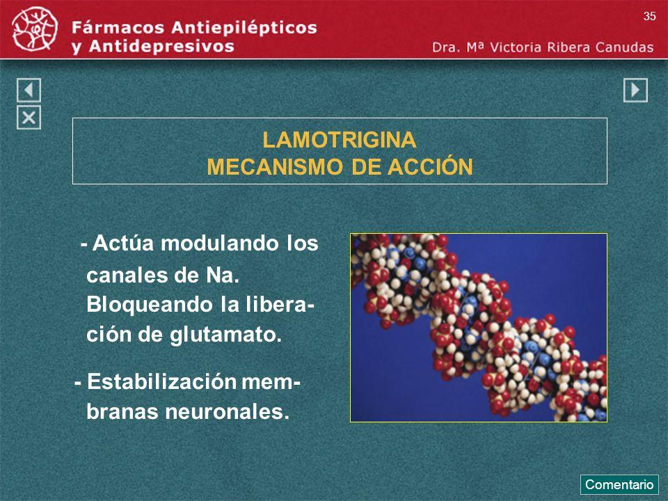 LAMOTRIGINA MECANISMO DE ACCIÓN - Actúa modulando los canales de Na. Bloqueando la libera- ción de glutamato. - Estabilización mem- branas neuronales.