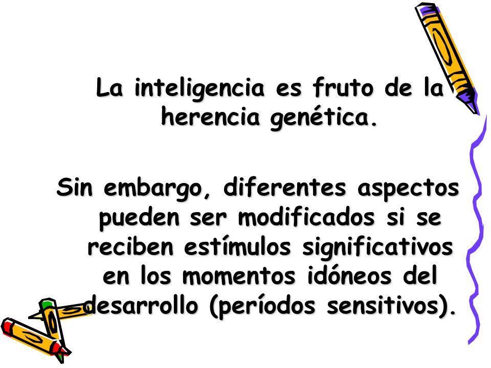 La inteligencia es fruto de la herencia genética. Sin embargo, diferentes aspectos pueden ser modificados si se reciben estímulos significativos en lo