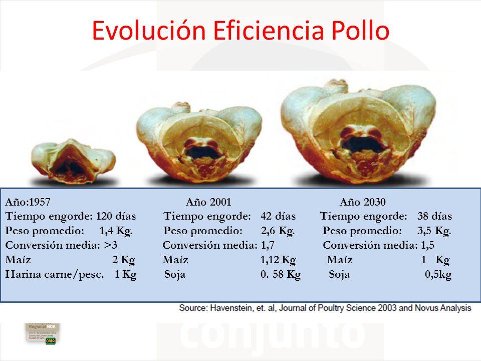 Evolución Eficiencia Pollo Año:1957 Año 2001 Año 2030 Tiempo engorde: 120 días Tiempo engorde: 42 días Tiempo engorde: 38 días Peso promedio: 1,4 Kg.