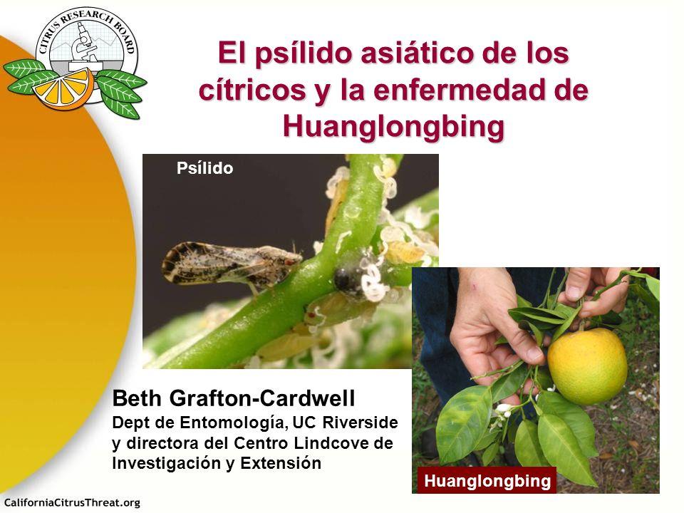 El psílido asiático de los cítricos y la enfermedad de Huanglongbing Psílido Huanglongbing Beth Grafton-Cardwell Dept de Entomología, UC Riverside y d