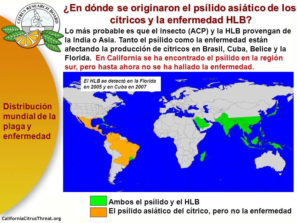 Ambos el psílido y el HLB El psílido asiático del cítrico, pero no la enfermedad El HLB se detectó en la Florida en 2005 y en Cuba en 2007 ¿En dónde s