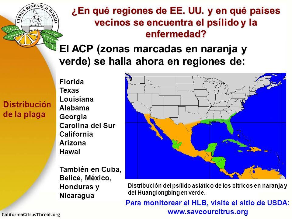 El ACP (zonas marcadas en naranja y verde) se halla ahora en regiones de: Florida Texas Louisiana Alabama Georgia Carolina del Sur California Arizona