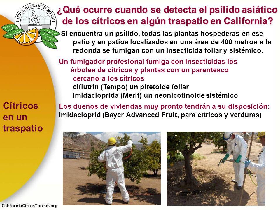 Si encuentra un psílido, todas las plantas hospederas en ese patio y en patios localizados en una área de 400 metros a la redonda se fumigan con un in