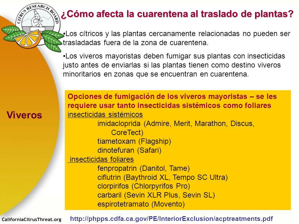 Los cítricos y las plantas cercanamente relacionadas no pueden ser trasladadas fuera de la zona de cuarentena. Los viveros mayoristas deben fumigar su