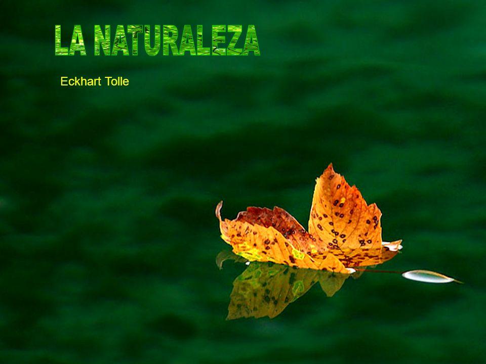Cuando percibes la naturaleza solo a través de la mente, del pensamiento, no puedes sentir su plenitud de vida, su ser.