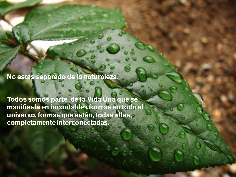 Necesitas que la naturaleza te enseñe y te ayude a reconectar con tu Ser.